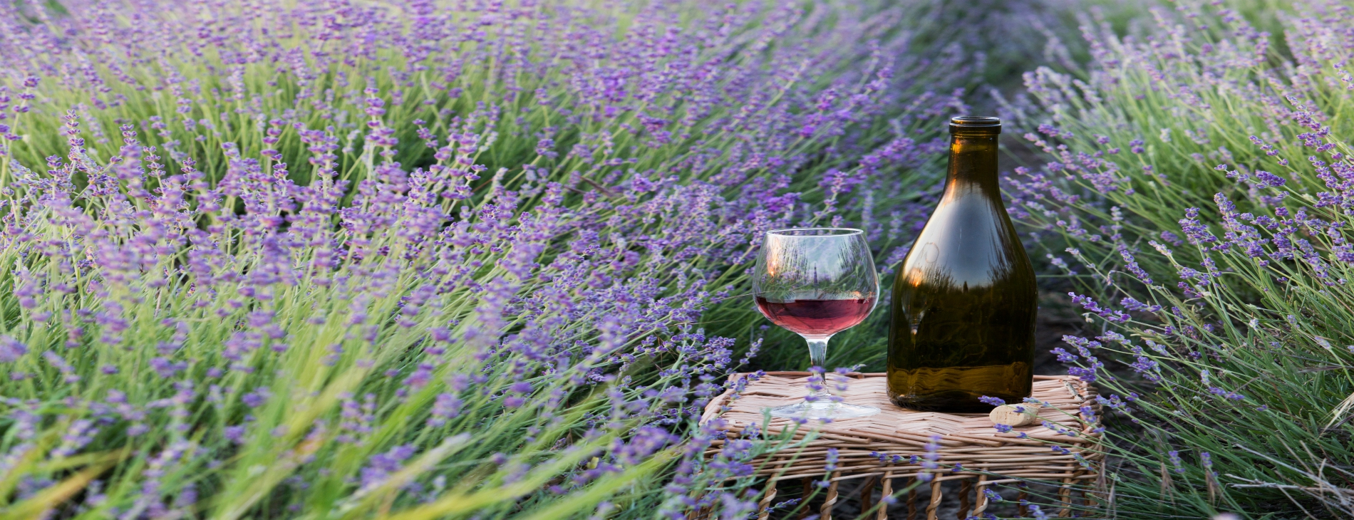 Breathe In and Experience Calming Lavender