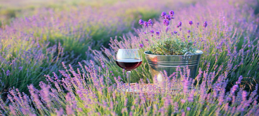 Wine and Garden Tour