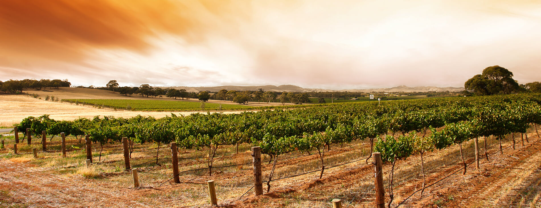 Explore Our Vineyards and Sample Wine